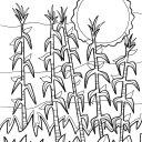 cornstalks_orig